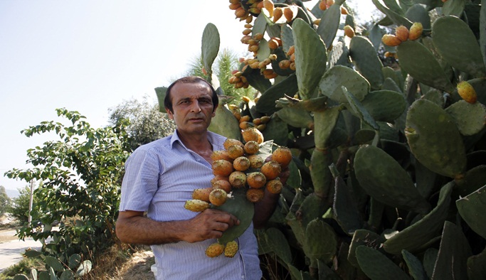 300 yıllık geçmişi olan meyve her derde deva