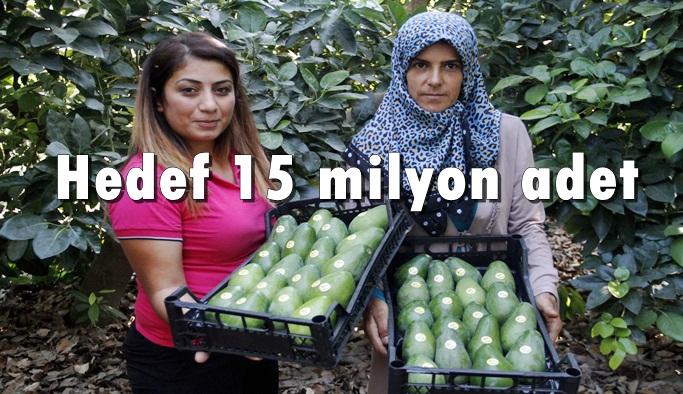 Alanya'da Avokado üretimi artıyor