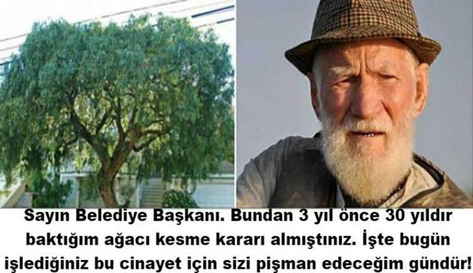 Ağacı belediye tarafından kesilen adamın intikamı