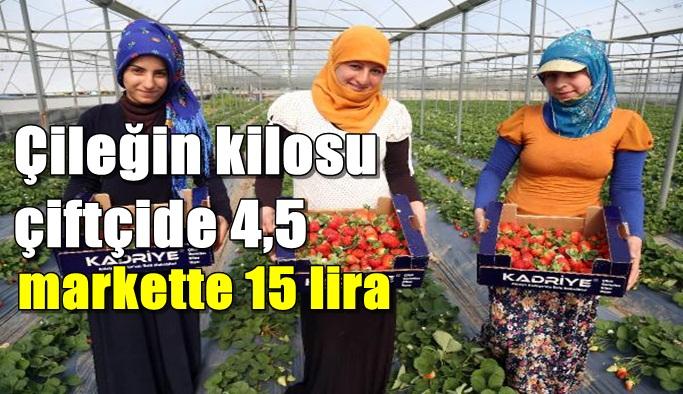 Çileğin kilosu çiftçide 4,5, markette 15 lira