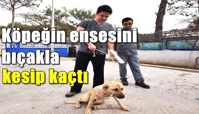 Köpeğin ensesini bıçakla kesip kaçtı
