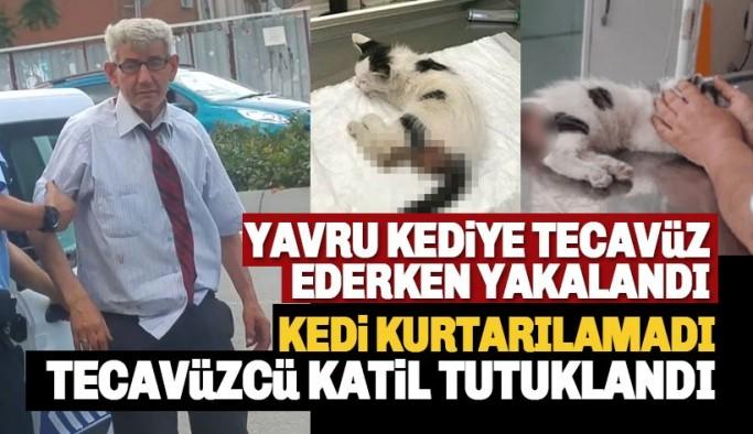 Yavru kediye tecavüz edip ölümüne sebep olan zanlı tutuklandı!