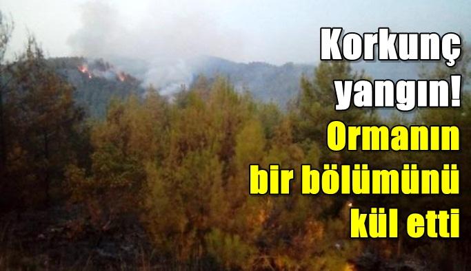 Korkunç yangın! Ormanın bir bölümünü kül etti