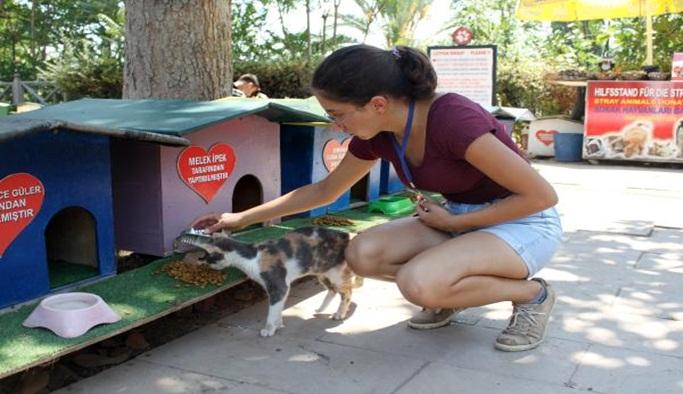 Kedi Park'a turist ilgisi