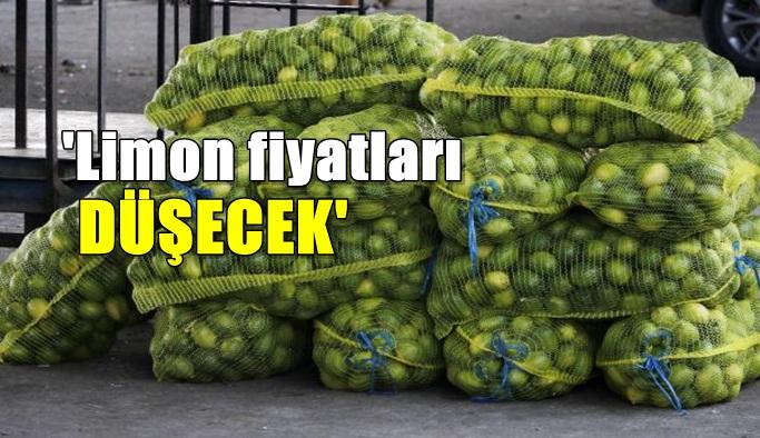 Limon fiyatları düşecek!