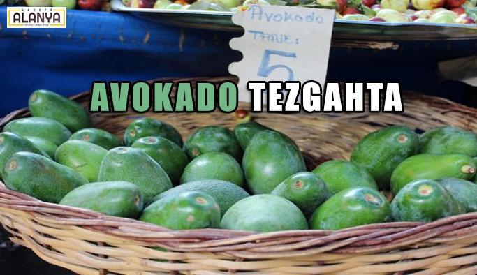 Avokado tezgahtaki yerini aldı