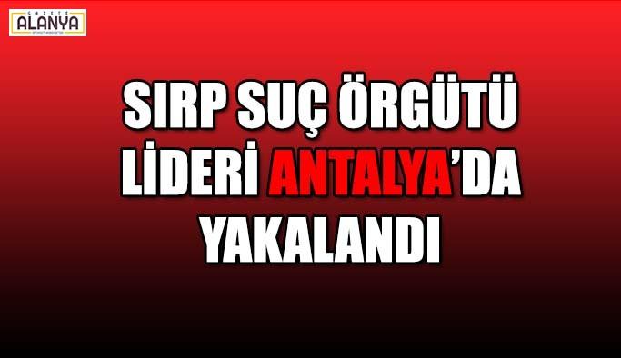 Sırp suç örgütü lideri Antalya'da yakalandı