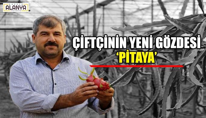 Çiftçinin yeni gözdesi 'Pitaya'