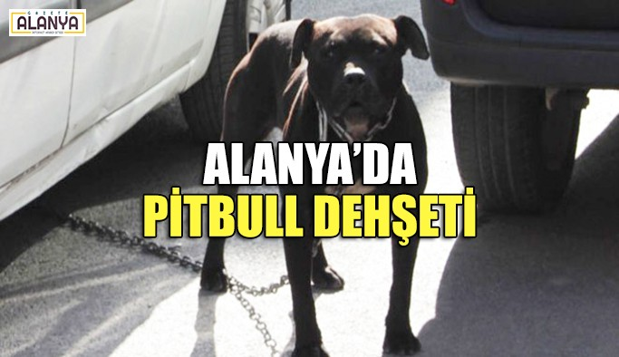 Alanya'da pitbull dehşeti