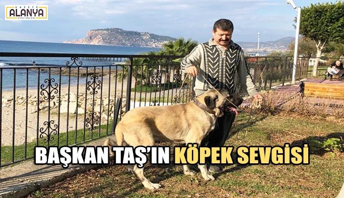 Başkan Taş'ın köpek sevgisi
