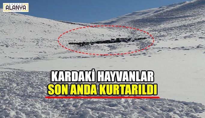 Karda mahsur kalan hayvanlar son anda kurtarıldı