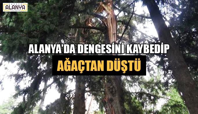 Alanya'da dengesini kaybedip ağaçtan düştü
