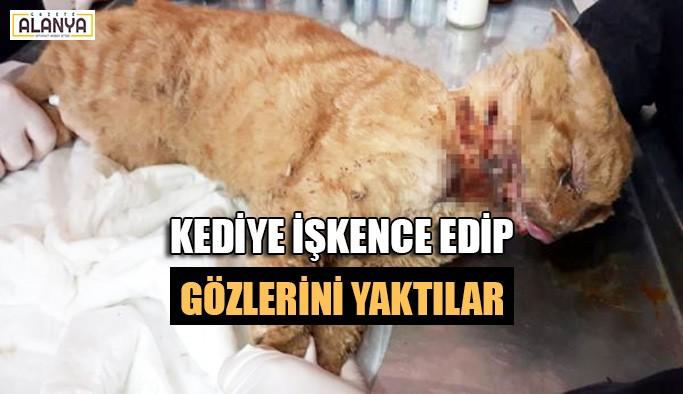 Kediye işkence edip gözlerini yaktılar