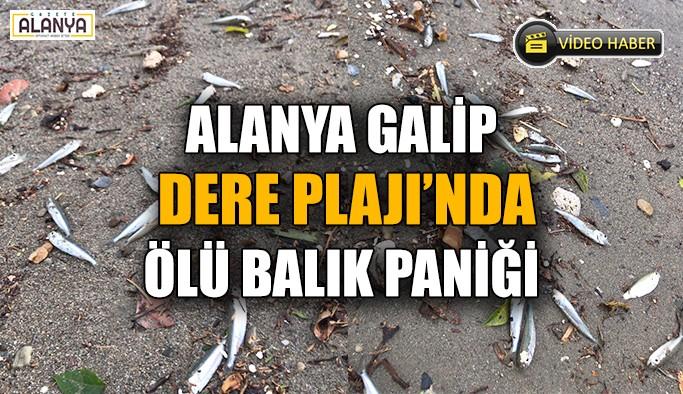 Alanya Galip Dere Plajı'nda ölü balık paniği