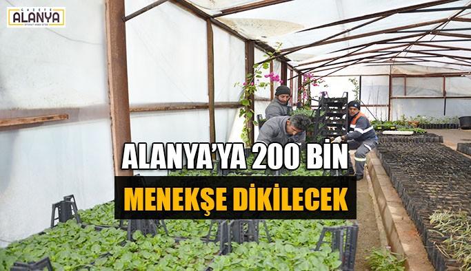 Alanya'ya 200 bin menekşe dikilecek