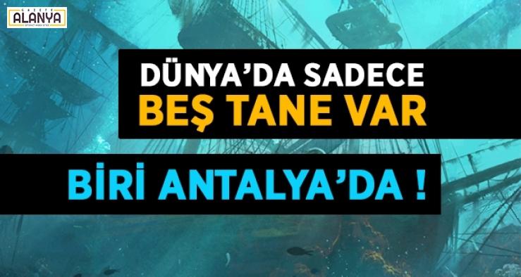Dünya'da sadece beş tane var ! Biri Antalya'da..