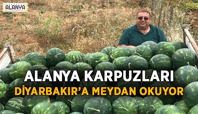 Alanya karpuzu Diyarbakır'a meydan okuyor