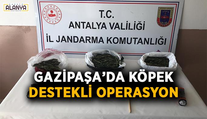 Gazipaşa'da köpek destekli operasyon