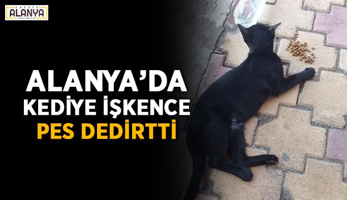 Alanya'da kediye işkence pes dedirtti