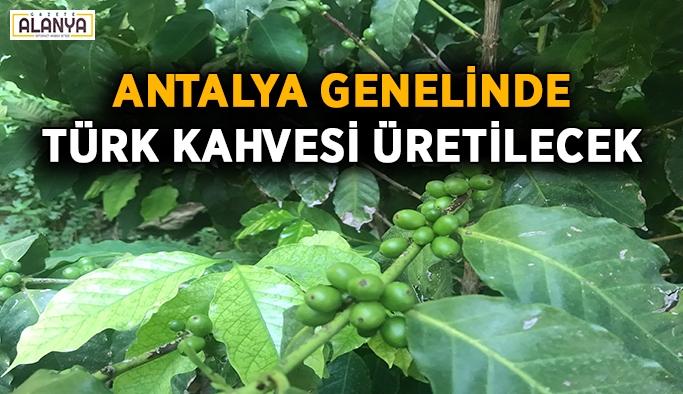 Antalya genelinde Türk kahvesi üretilecek