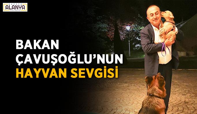 Bakan Çavuşoğlu'nun hayvan sevgisi
