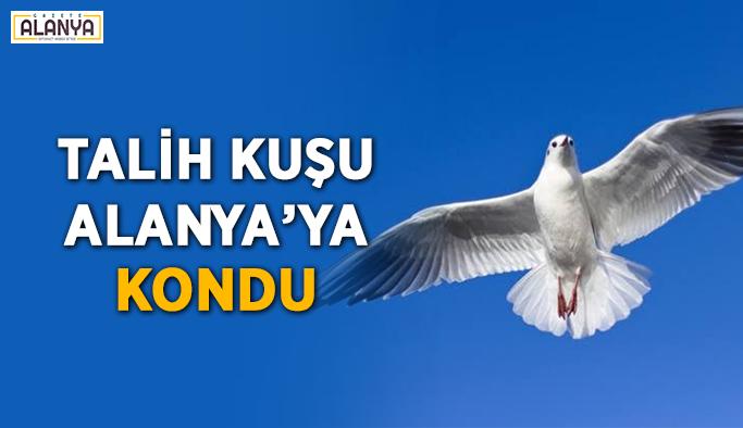 Talih kuşu Alanya'ya kondu