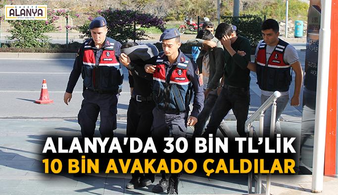 Alanya'da 30 bin TL değerinde 10 bin avakado çaldılar