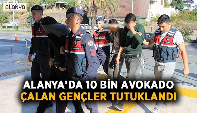 Alanya'da 10 bin avokado çalan gençler tutuklandı