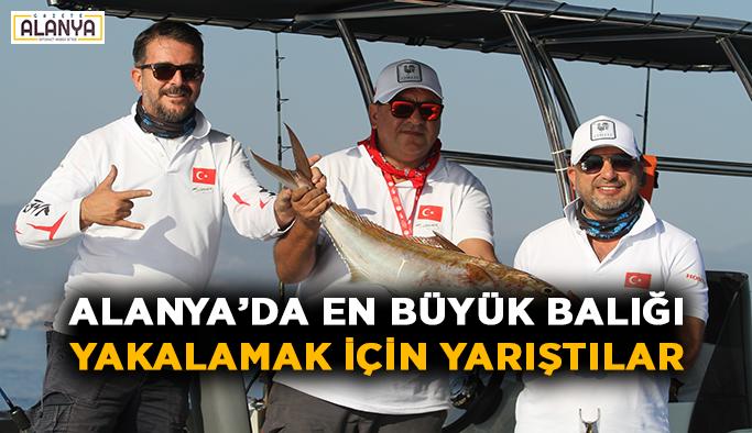 Alanya'da en büyük balığı yakalamak için yarıştılar