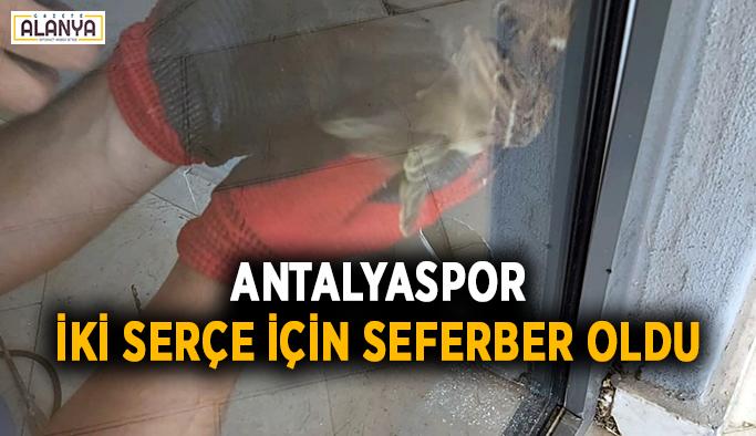 Antalyaspor, iki serçe için seferber oldu