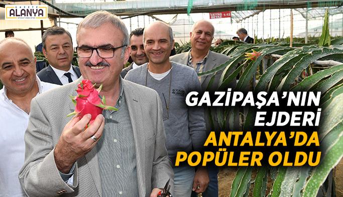 Ejder, Antalya'da arttıkça artıyor
