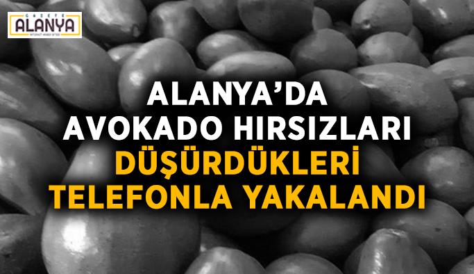 Alanya'da avokado hırsızları düşürdükleri telefonla yakalandı