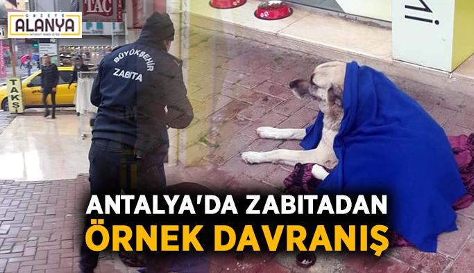 Antalya'da zabıtadan örnek davranış