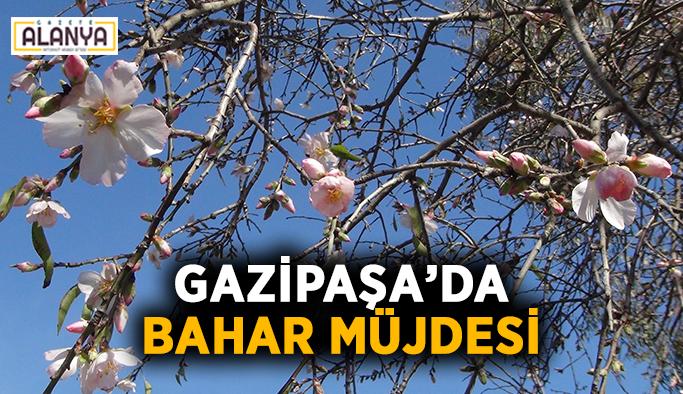 Gazipaşa'da bahar müjdesi