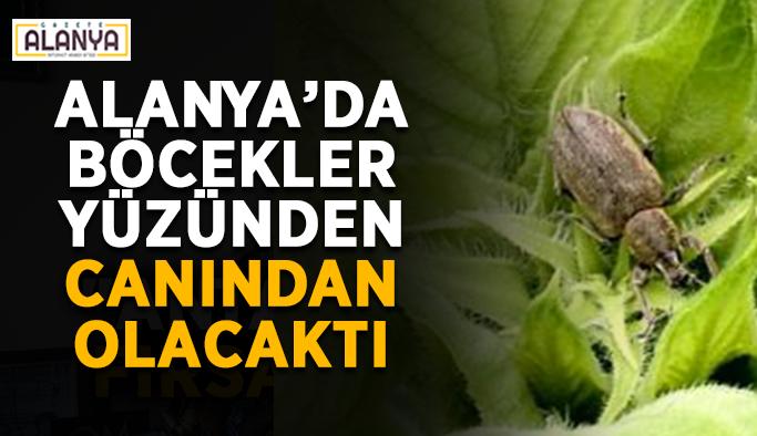Alanya'da böcekler yüzünden canından olacaktı