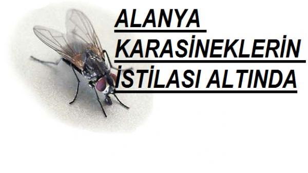 ALANYA KARASİNEKLERİN İSTİLASI ALTINDA