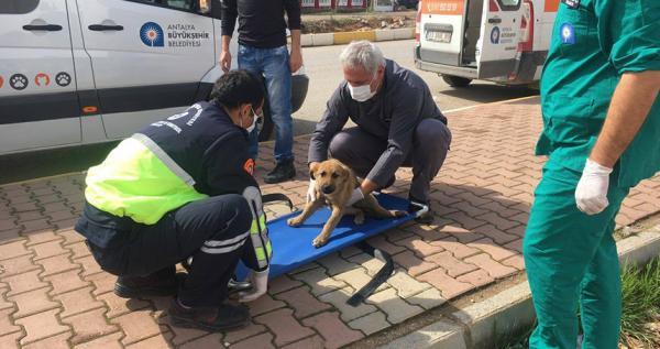 Büyükşehir\\\\\\\'den yaralı hayvanlara Ambulanslı yardım