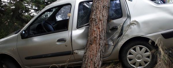 Hayatını ağaç kurtardı
