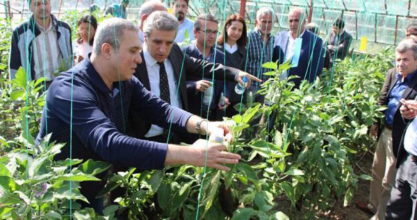 Patlıcan serasında biyolojik mücadele