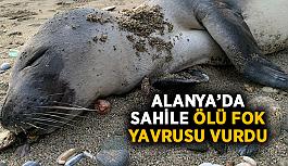 Gören bir daha baktı! Alanya'da sahile ölü fok yavrusu vurdu