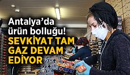 Antalya'da ürün bolluğu! Sevkiyat tam gaz devam ediyor