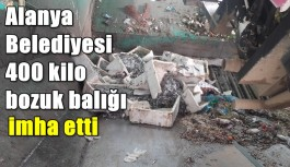 Alanya Belediyesi 400 kilo bozuk balığı imha etti