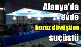 Alanya'da evde horoz dövüşüne suçüstü
