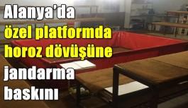 Alanya'da özel platformda horoz dövüşüne jandarma baskını