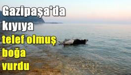 Gazipaşa'da kıyıya telef olmuş boğa vurdu