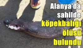 Alanya'da sahilde köpekbalığı ölüsü bulundu