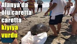 Alanya'da ölü caretta caretta kıyıya vurdu