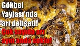 SON DAKİKA! Gökbel Yaylası'nda arı dehşeti