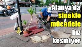 Alanya'da sinekle mücadele hız kesmiyor