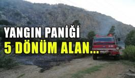 Yangın paniği 5 dönüm alan